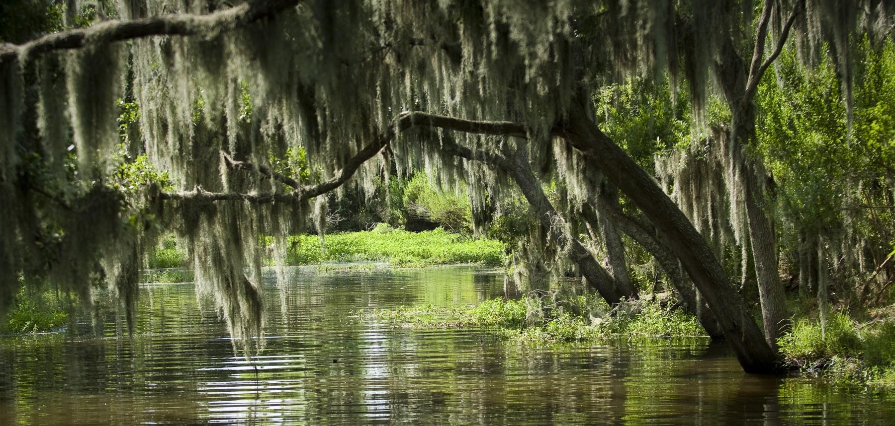 Louisiane-bayous